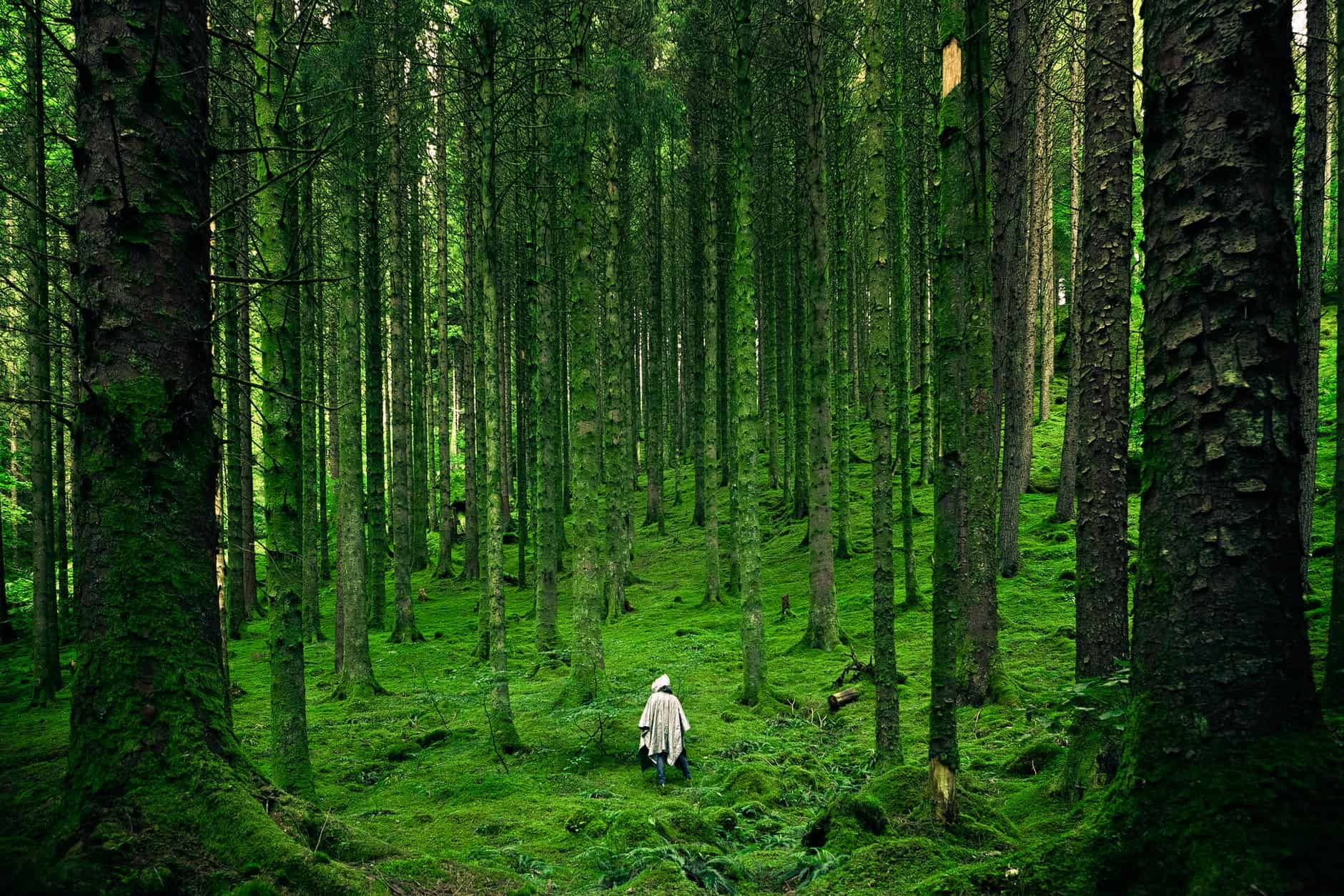person walking between green forest trees